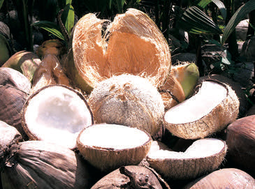 coconut saturated fats