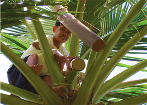 Owners of Coconut Secret