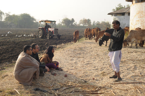 Bhika shares what the cows have taught him, while we sit on a bed of nutritious organic sugarcane husk that the cows leisurely graze on