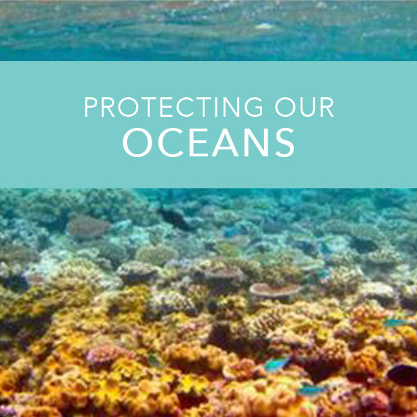 How our sunscreen protects the ocean!