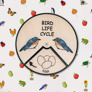 Learning Wheels - Animal Lifecycles-[product_vendor-My Happy Helpers
