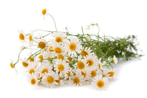 CHAMOMILE: IT CALMS MORE THAN JUST YOUR MIND