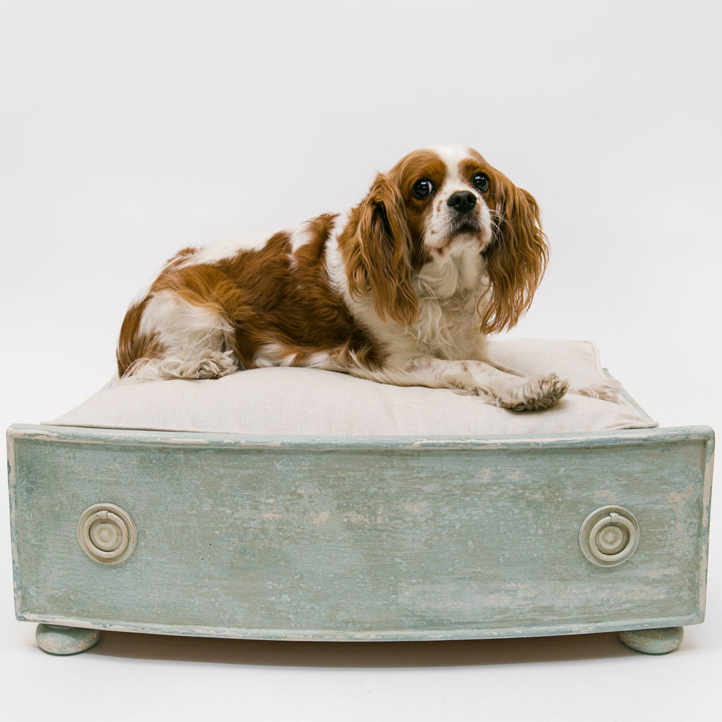 A DIY Dog Bed for Your Furry Friend