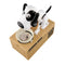Super Cute Doggy Save-A-Coin Bank - TrendiaStore