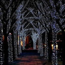 50 LED Solar Fairy Lights - TrendiaStore
