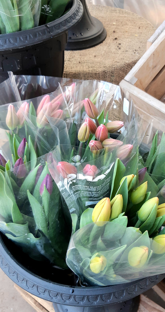 Fresh Cut Tulip Bouquets