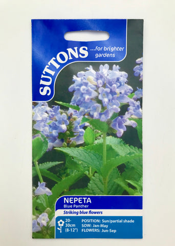 Nepeta 'Blue Panther' Suttons