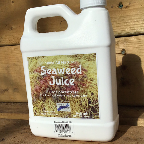 Seaweed Juice (concentrate)