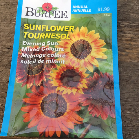 Sunflower, Burpee