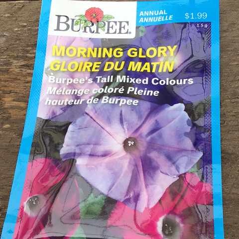 Morning Glory, Burpee