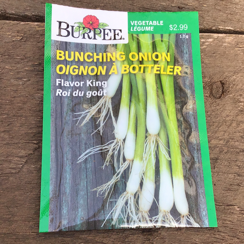 Bunching Onion, Burpee