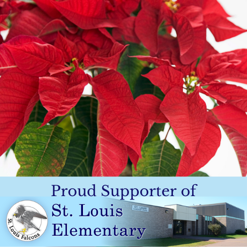 St. Louis Elementary Poinsettia - 6 Inch