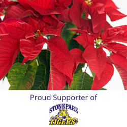 Stonepark Home and School Poinsettia - 6 Inch