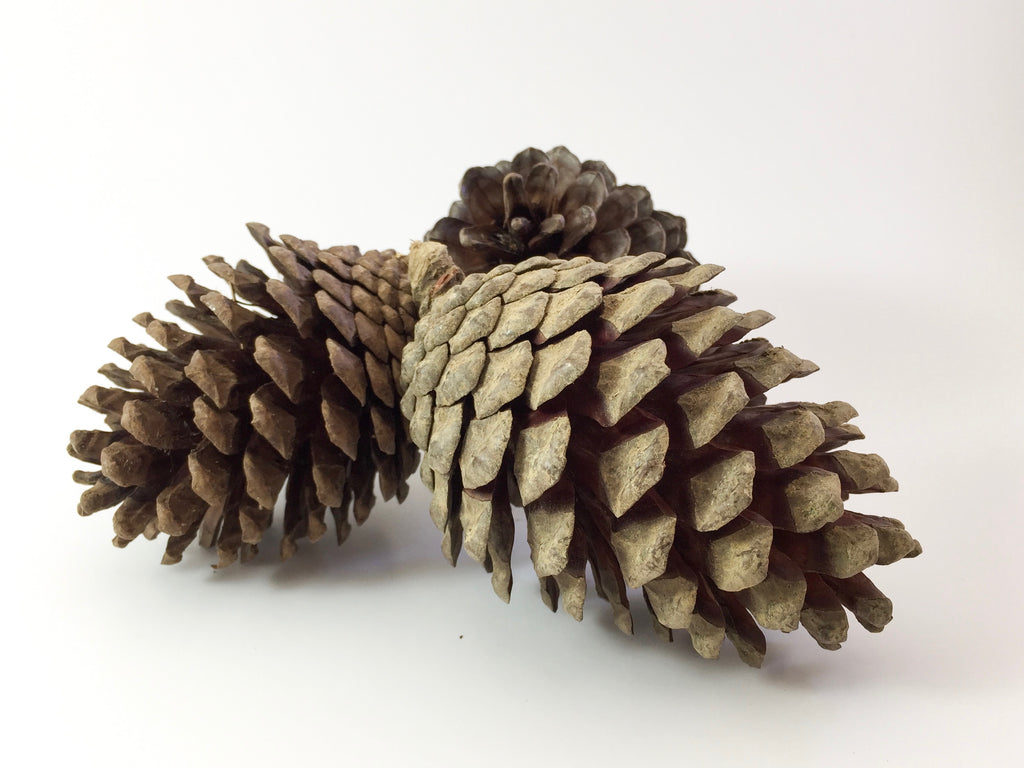 Natural Pine Cones - Play - The Hidden Treehouse