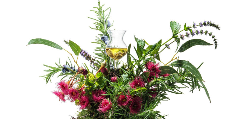 What are plant botanicals