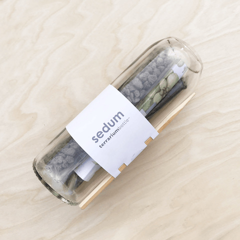 Sedum Horizontal Recycled Wine Bottle Terrarium