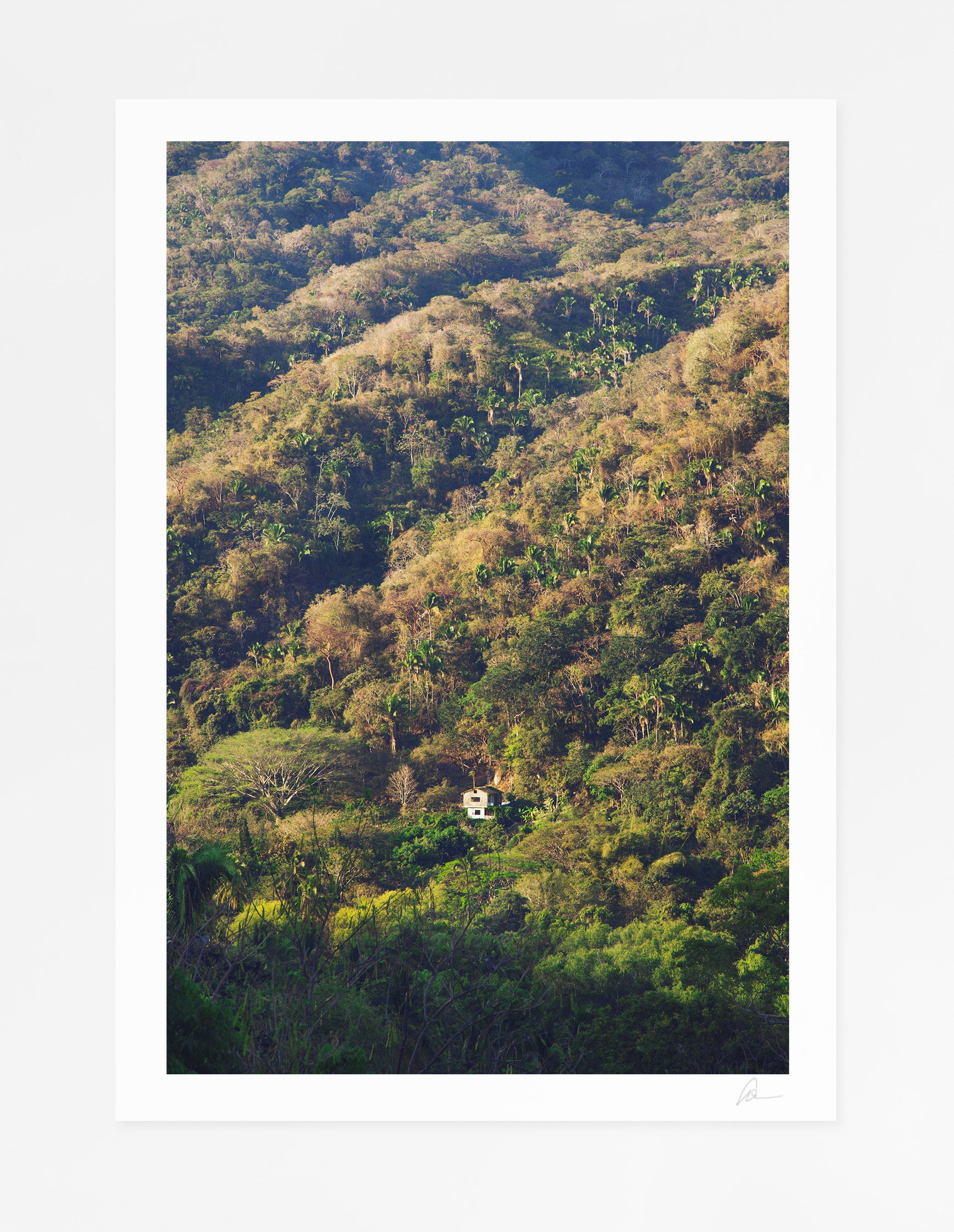 Yelapa Jungle