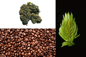 Quality Control for Coffee, Hops, and Cannabis