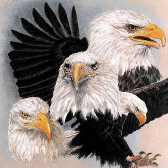 Eagle #10 - DIY Diamond  Painting