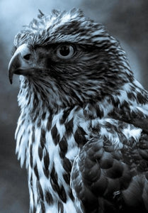 Tough Eagle - DIY Diamond Painting