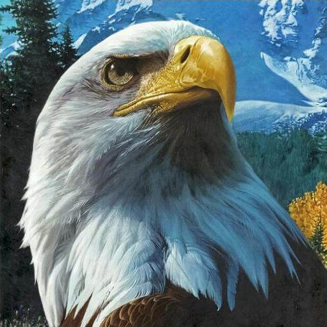 eagle beauty diamond painting kit