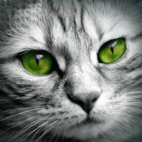 Image of Gray Cat - DIY Diamond Painting