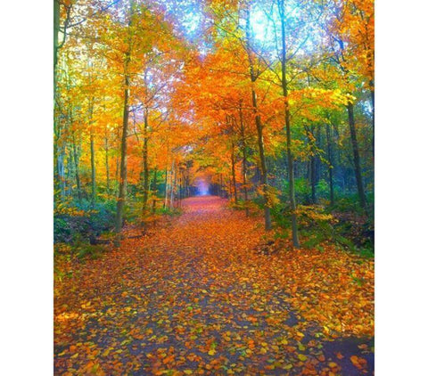 Image of Colorful autumn forest - DIY Diamond Painting