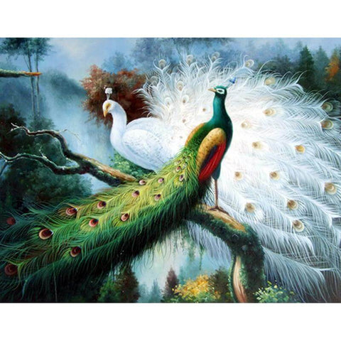 Image of white peacock painting
