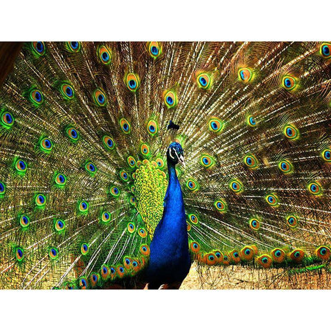diamond painting kits peacock