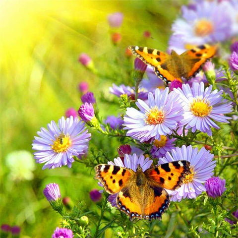 Image of Butterfly on Daisy Flower - DIY Diamond  Painting