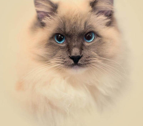 Image of cute cats paintings