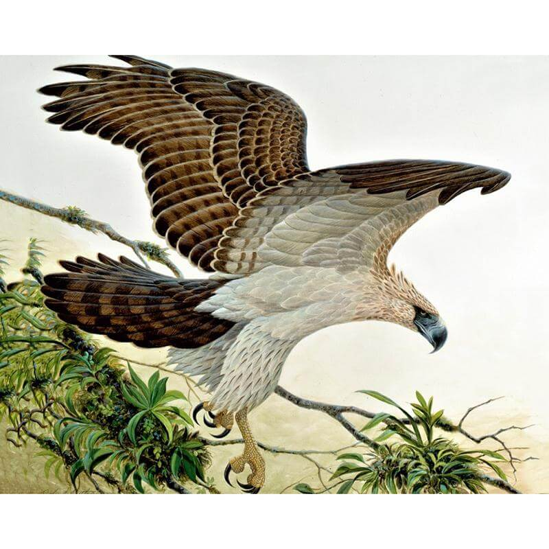 Eagle #2 -  DIY Diamond Painting