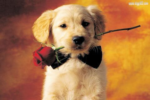Image of Sweet Puppy with a Rose - DIY Painting By Numbers
