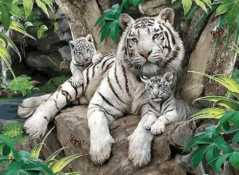 White Tigers - DIY Painting By Numbers