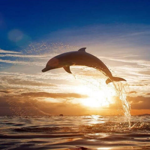 Dolphin in the Sunset - DIY Painting By Numbers