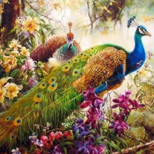 Peacock  - DIY Painting By Numbers animal