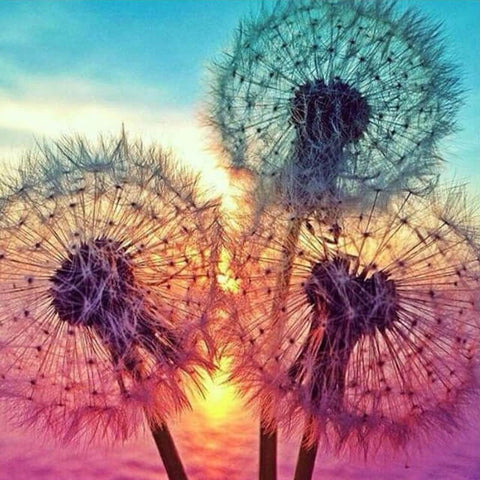 Image of Colourful Dandelion - DIY Diamond  Painting