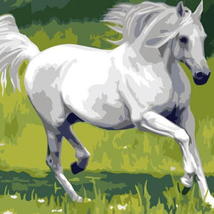 White Horse - DIY Painting By Numbers