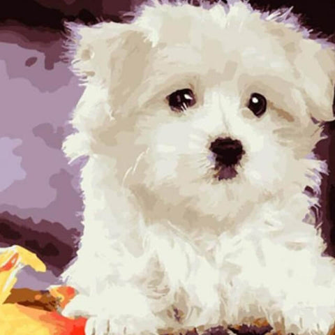 Image of White Dog - DIY Painting By Numbers
