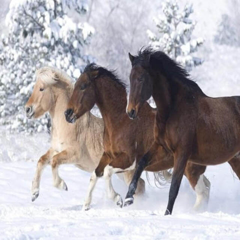 Image of Horses in the Snow - DIY Painting By Numbers