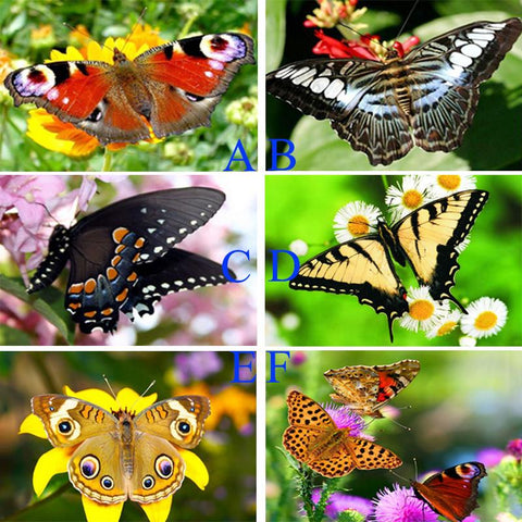 Image of Flowers and Butterfly - DIY Diamond  Painting