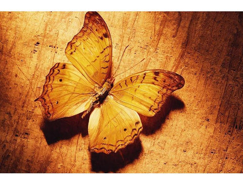 Image of Yellow Butterfly - DIY Diamond Painting