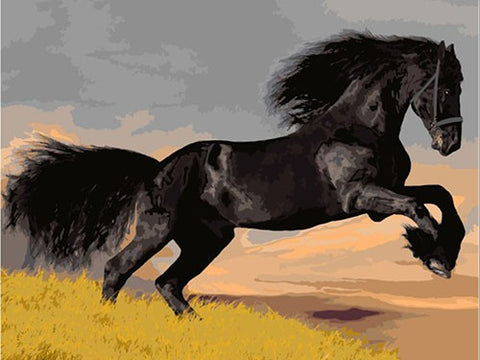 Wild Black Horse - DIY Painting By Numbers