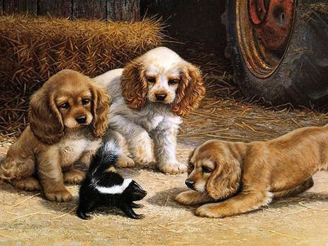 Image of Dogs Playing - DIY Painting By Numbers