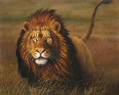 Image of Lion in the Nature -  DIY Painting By Numbers