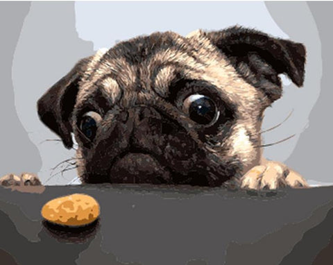 Image of Funny Dog looking at a small cookie - DIY Painting By Numbers