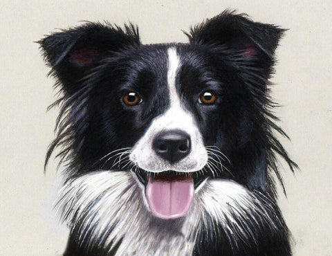 Image of Border Collie - DIY Diamond Painting