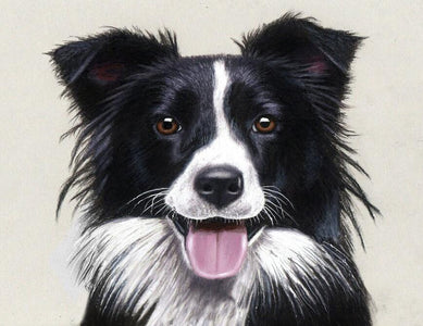 Border Collie - DIY Diamond Painting