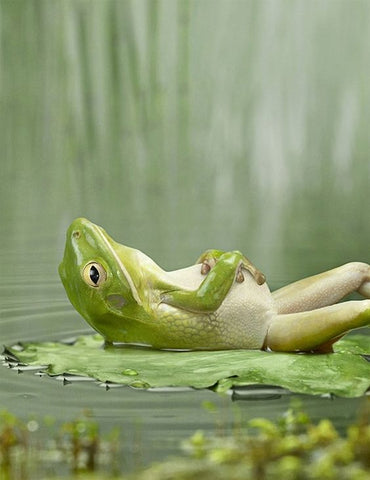 Image of Sleeping Frog - DIY Diamond Painting