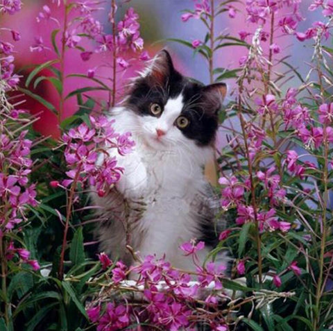 Image of Cat in the Flowers - DIY Diamond Painting